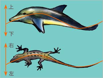 Mammals01