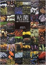 粘菌―驚くべき生命力の謎